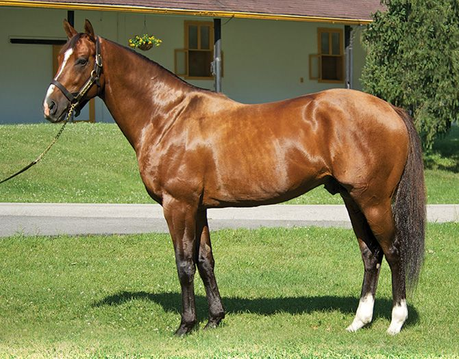 Data Link (USA) - Claiborne Farm (USA) | Animals | Horses