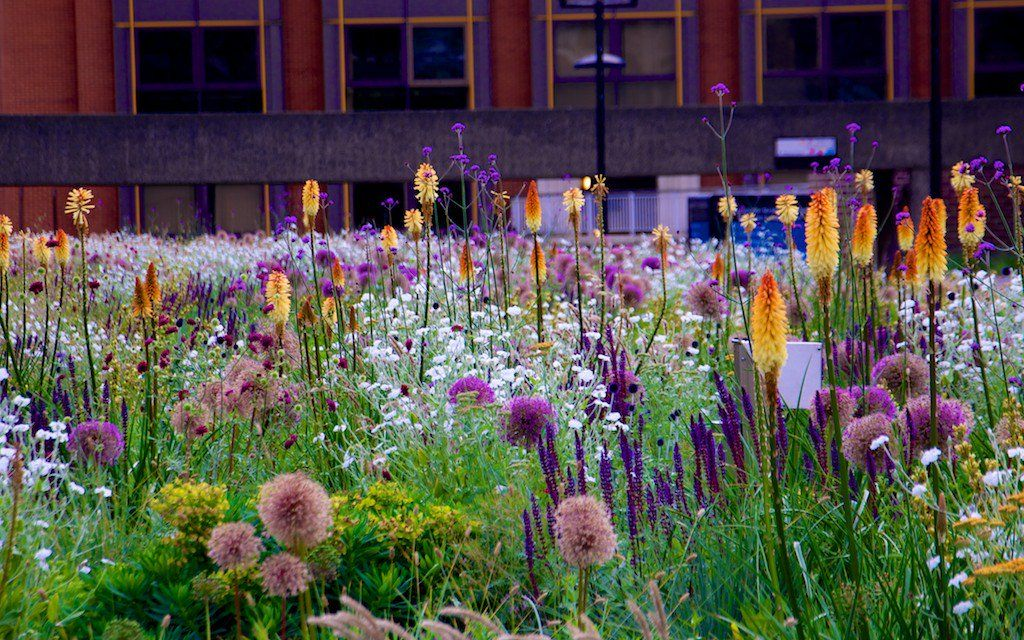 Steppe Planting at the Barbican Center's High Walk