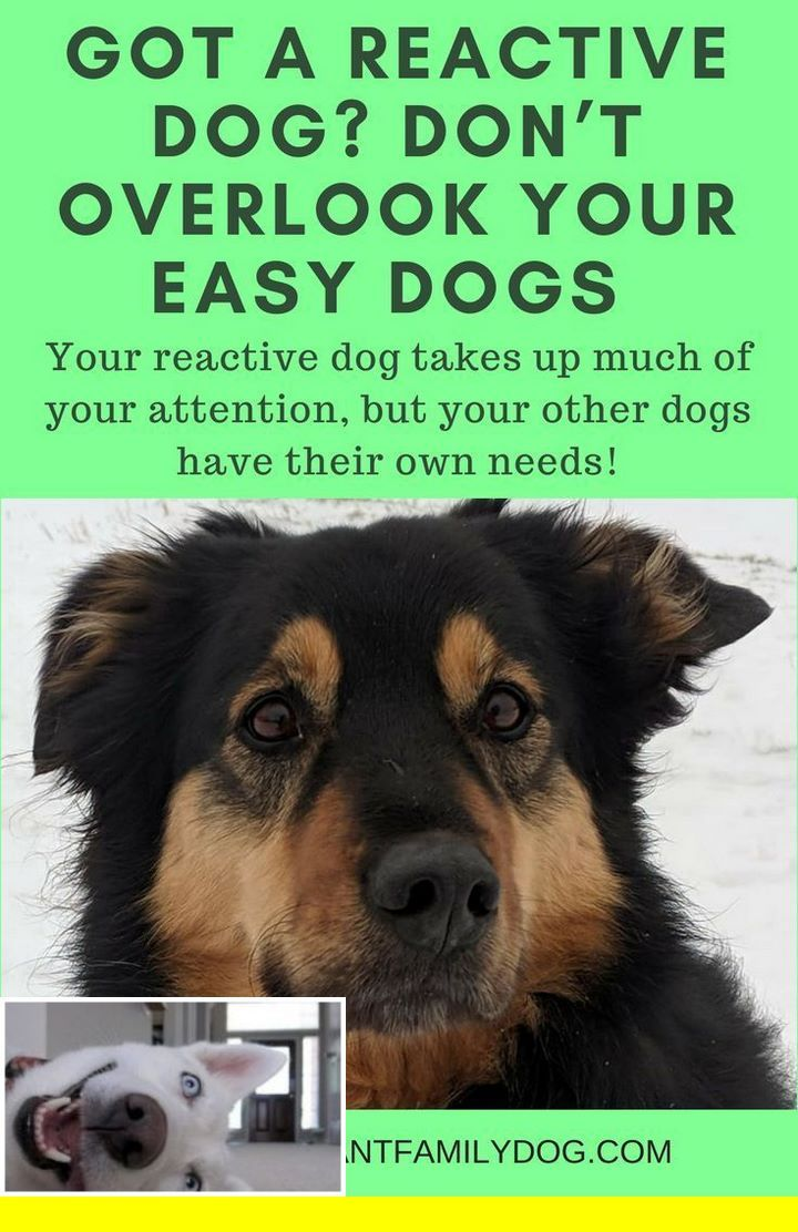 Clicker Training Lesson Plan Dogtraining And Dangerous Dog