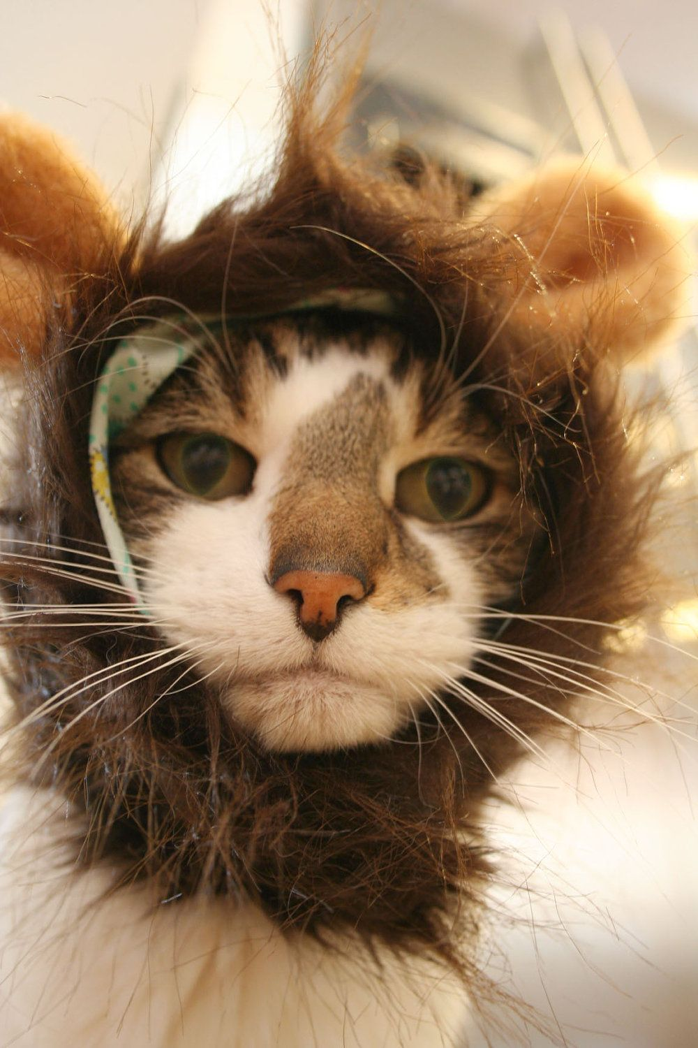 Monkey Hat for Cats. 25.00, via Etsy. *** This cat looks
