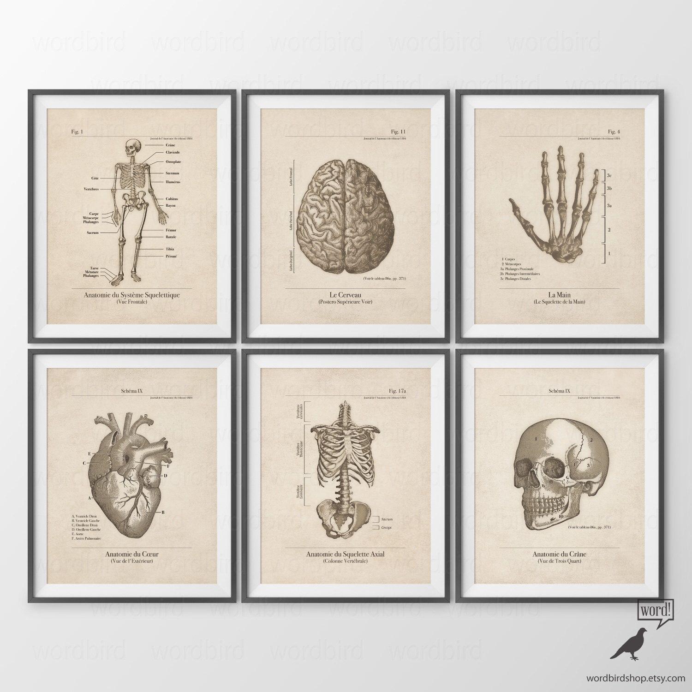 Human Anatomy Posters, Set of 6, Human Anatomy Prints, Vintage ...
