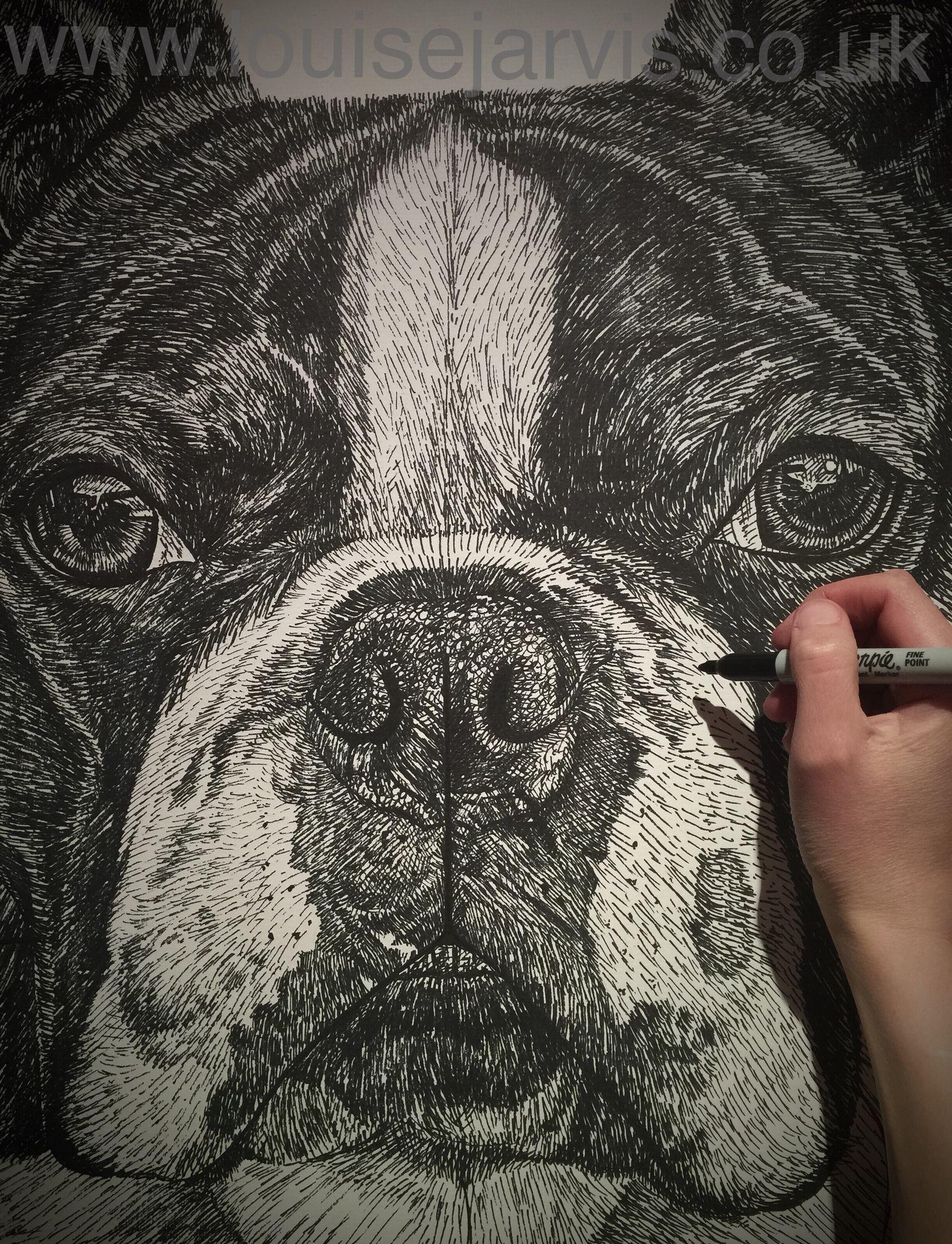 "Wilharman da Vinci (Vinci) artwork in progress :) Boston terrier 20""x20"" pen and watercolour (still to colour) follow progress at Facebook.com/LouiseJarvisArt  https://www.facebook.com/LouiseJarvisArt/posts/1109839555747459 #bostonterrier #dogs canineart"