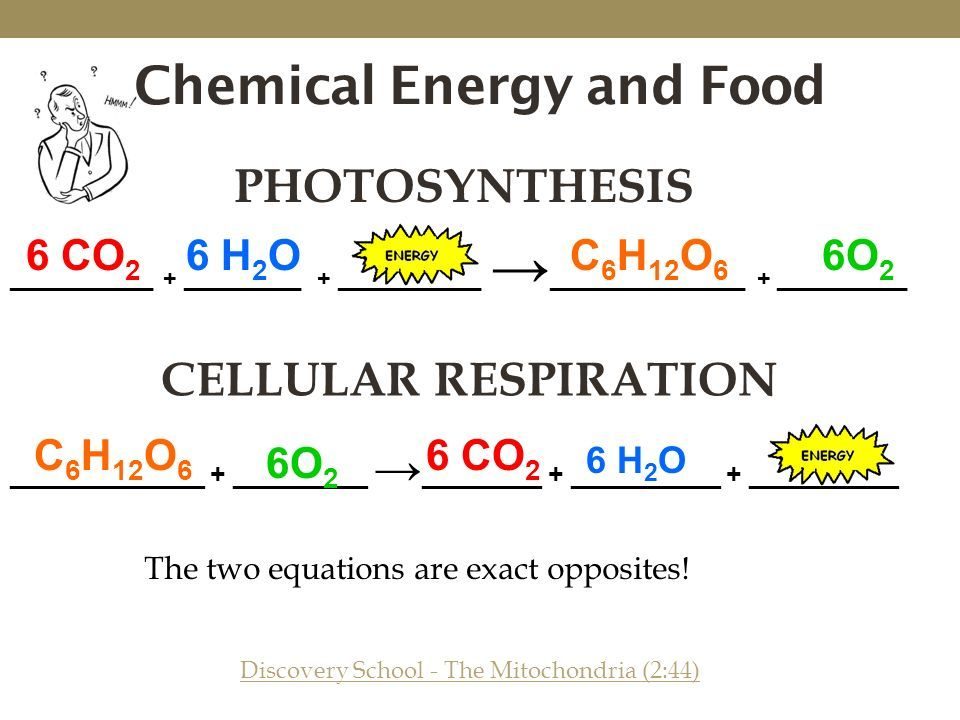 What is the chemical equation for cellular respiration video sci what is the chemical equation for cellular respiration video ccuart Gallery