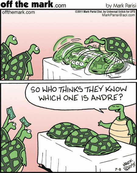 Pin By Tracy Flynn On Turtle Obsession Turtles Funny Turtle Day Turtle Love