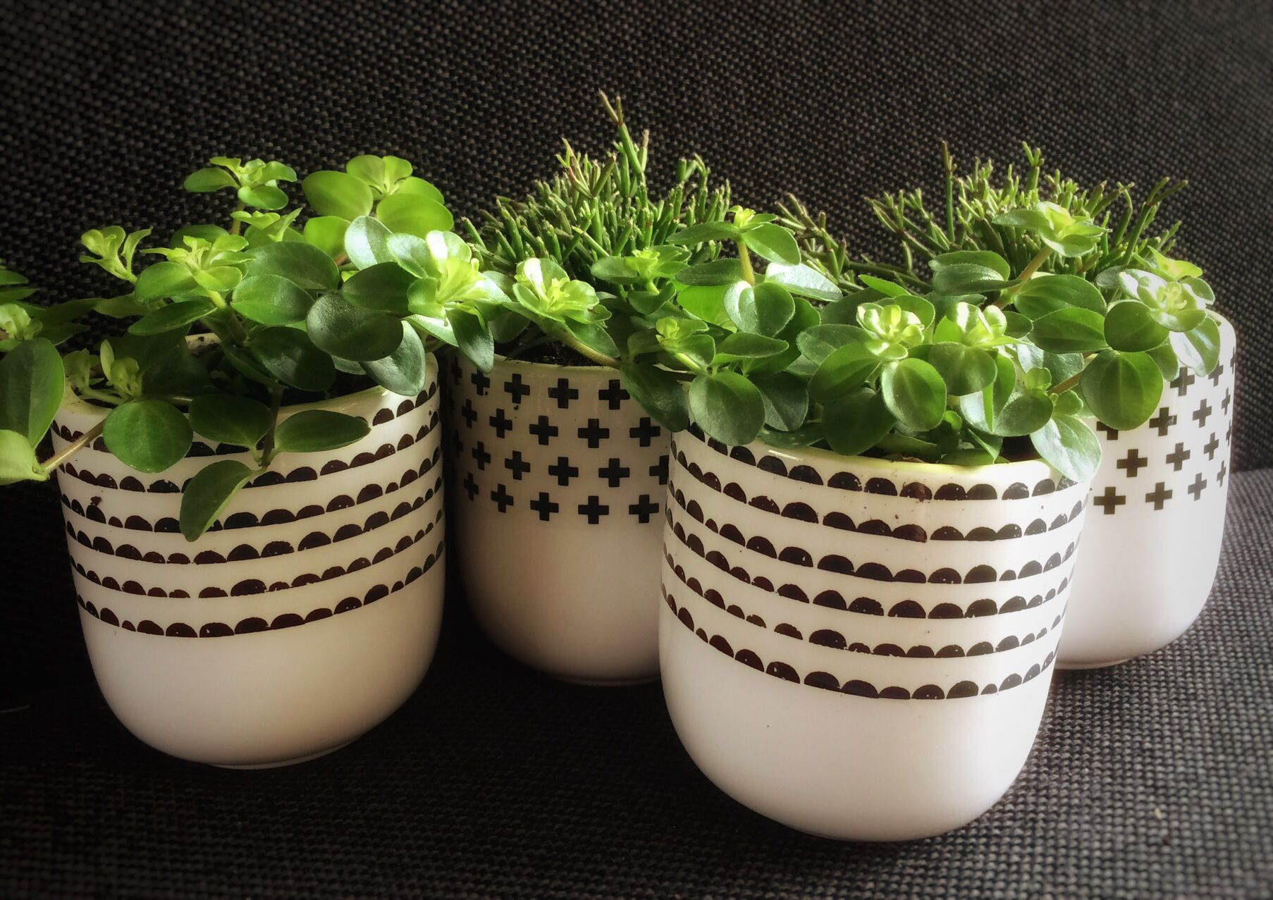 Planten woonkamerplanten bloempotten van Xenos ferm living zwart wit