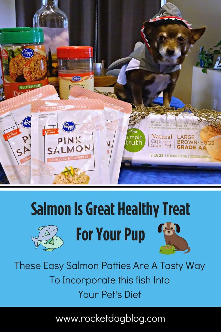Salmon is a great addition to your dogs diet it offers