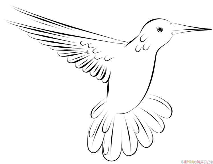 Line Drawing Hummingbird : How to draw a hummingbird flying step by drawing