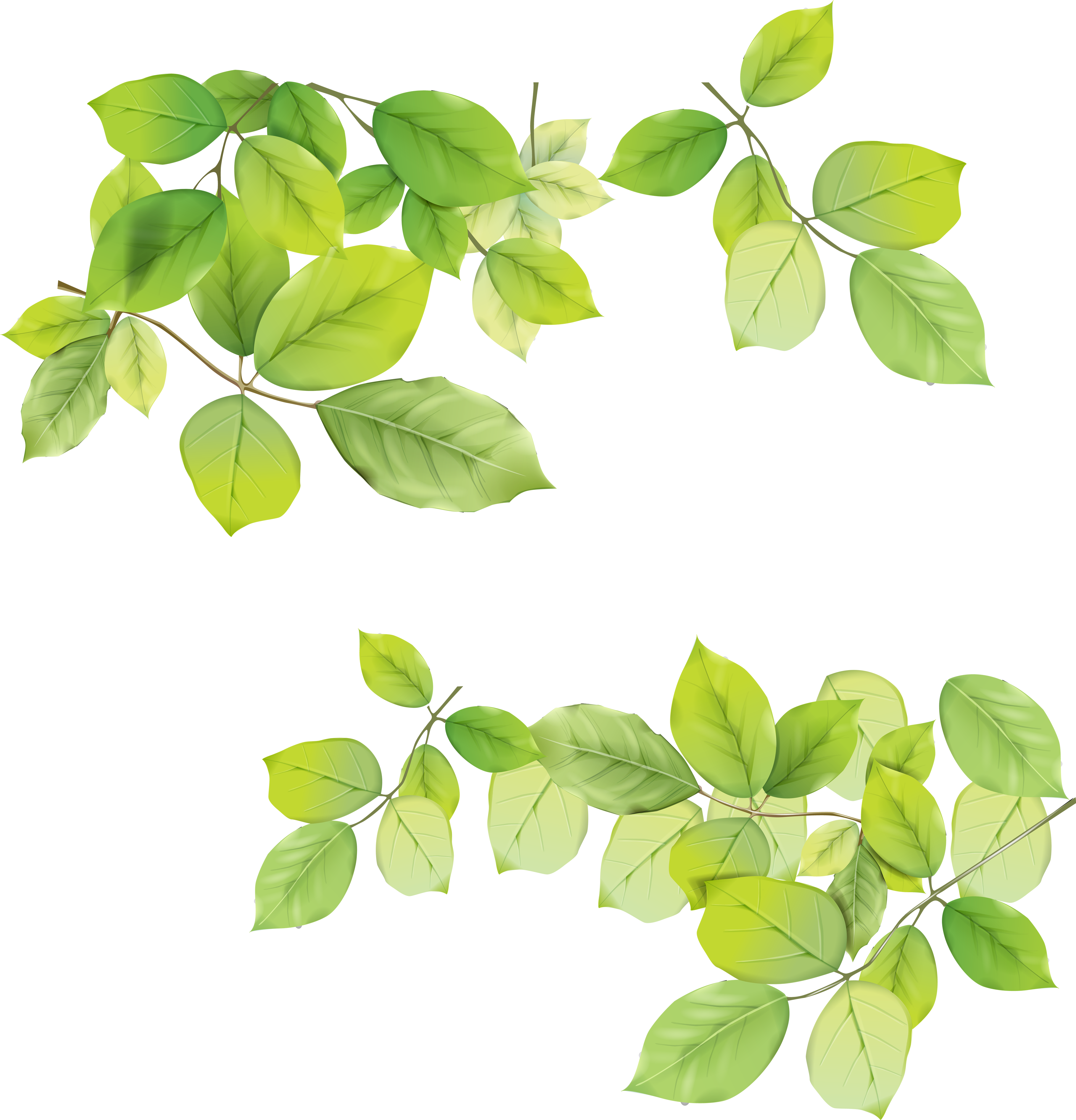 Green Leaf Png Background Green Branch Branches Clover Dark Green Green Leaves Png Leaves