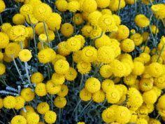 El blog de la tabla plantas jardin mediterraneo im genes for Plantas jardin mediterraneo