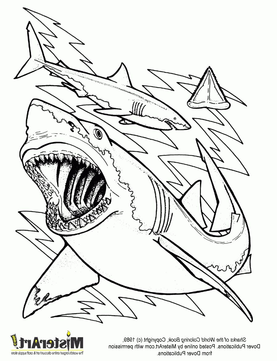 shark coloring book pages photo sharks coloring page | News to Go 3 ...