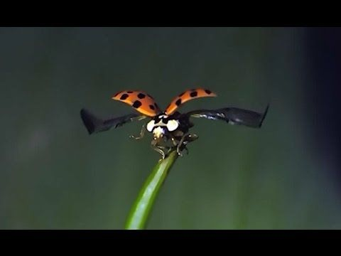28 Ladybug Flying In Slow Motion Very Cool To Watch Youtube