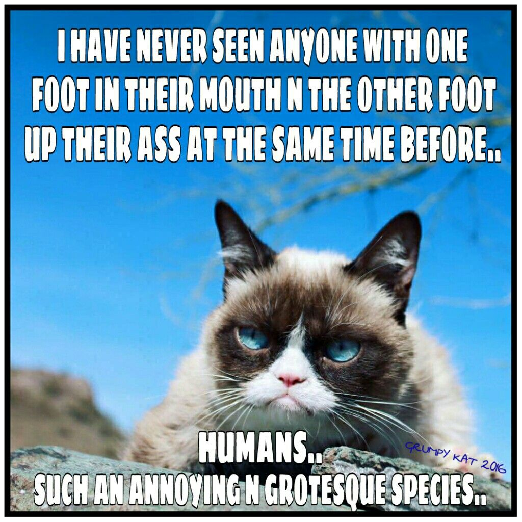 Another grumpy cat meme by the other grumpy kat 2016 2 feet
