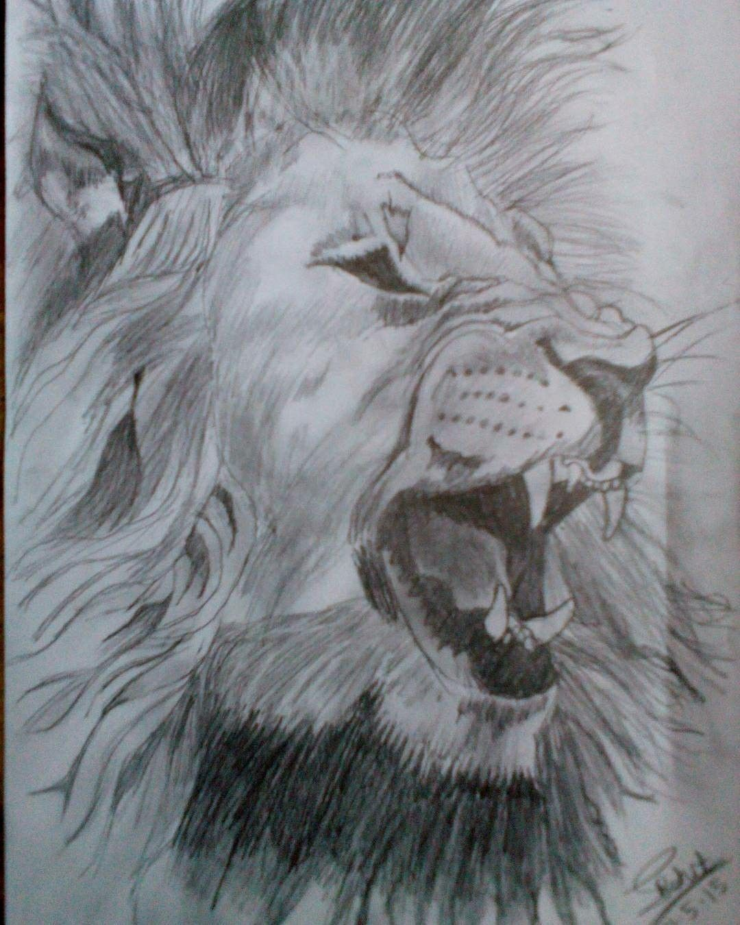 Angry lion pencil sketch by me pencil sketches drawn by me in