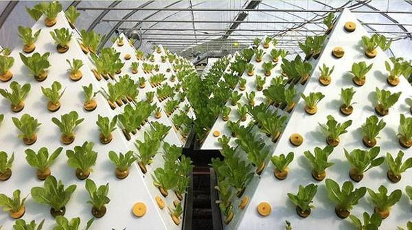 the pyramid garden design can grow plants up to 30  faster with 80  less water