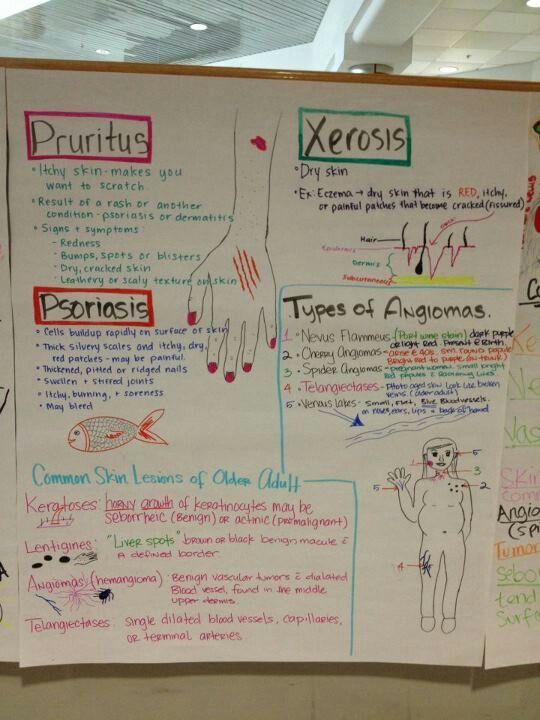 Concept map | Nursing school notes, Pharmacology nursing ...