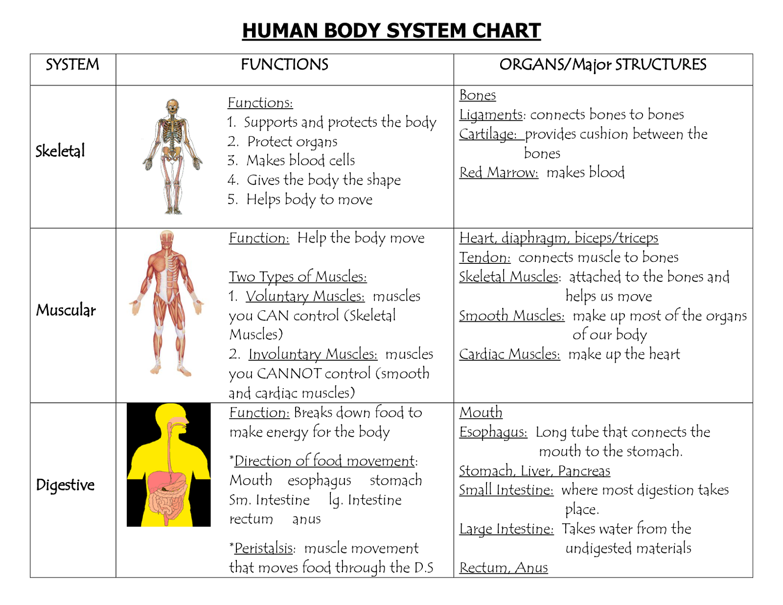 Human Body System Chart Organs Diagram And Their Functions