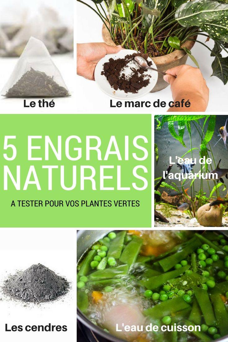 nos 5 engrais naturels pour des plantes vertes luxuriantes. Black Bedroom Furniture Sets. Home Design Ideas