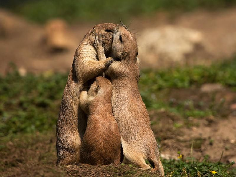 """Résultat de recherche d'images pour """"animaux et amour"""""""