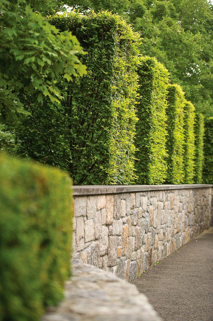 Hedge - Doyle Herman Design (With images) | Garden hedges ...