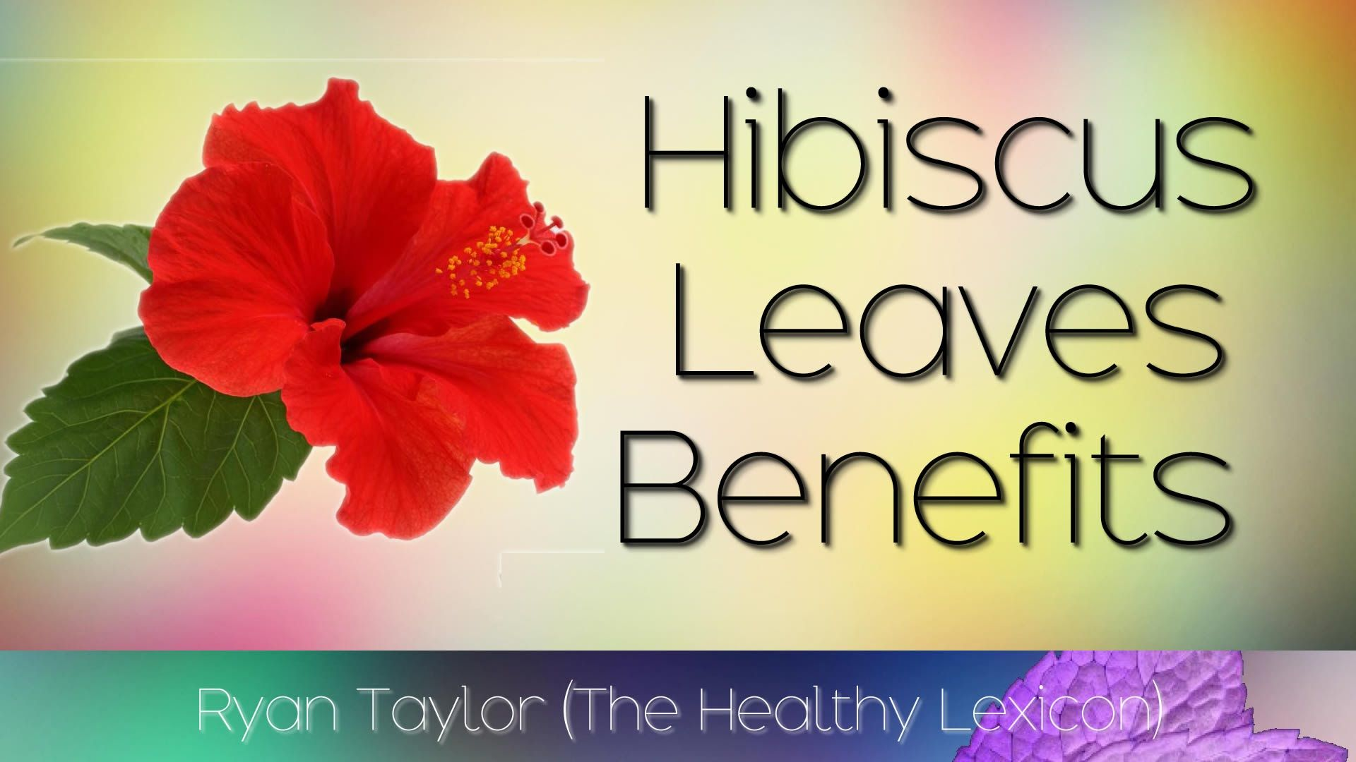 Hibiscus Leaves Benefits And Uses Hibiscus Leaves Hibiscus Plant Leaves
