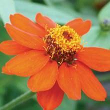 Summer Flowers for the Desert Garden - Phoenix Home & Garden