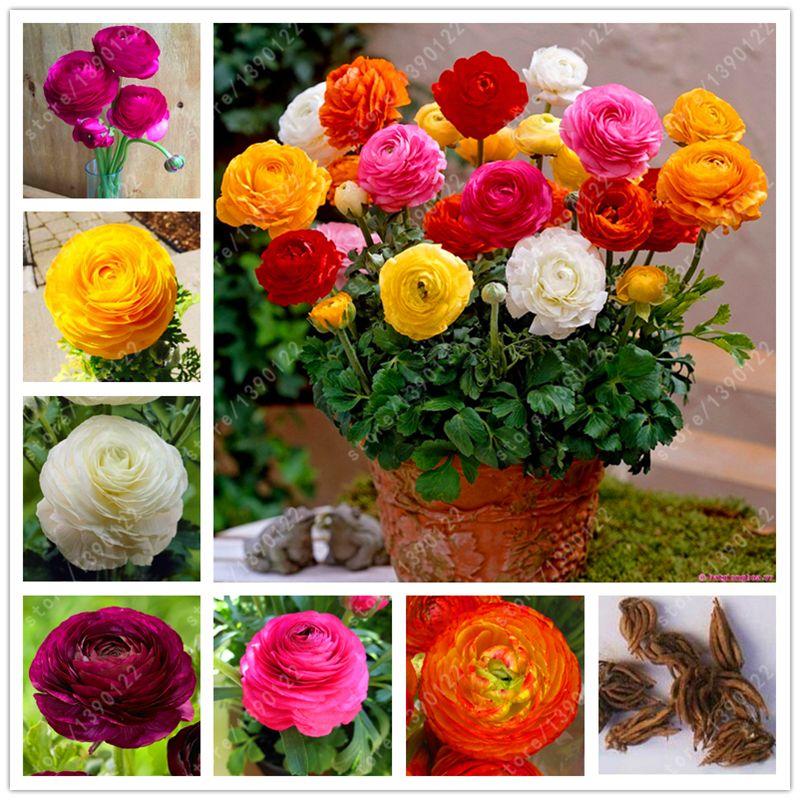 Pin On Garden Supplies
