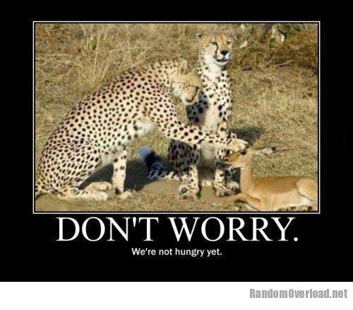 Leopard Funny Funny Snow Leopard Memes Funny Animals Funny