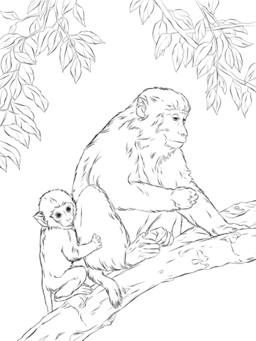 Rhesus Macaque Mother With Cute Baby Coloring Page