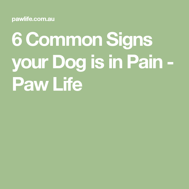 6 Common Signs your Dog is in Pain - Paw Life