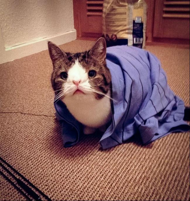 Monty, um gatinho fora do comum