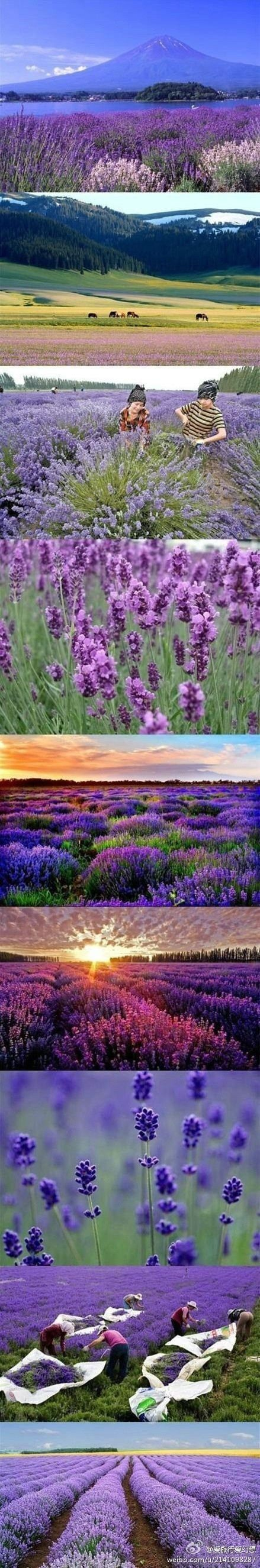 Lavendar Town China - Xinjiang Yili. I love lavendar and I love Asia, so I would probably love this place as well.