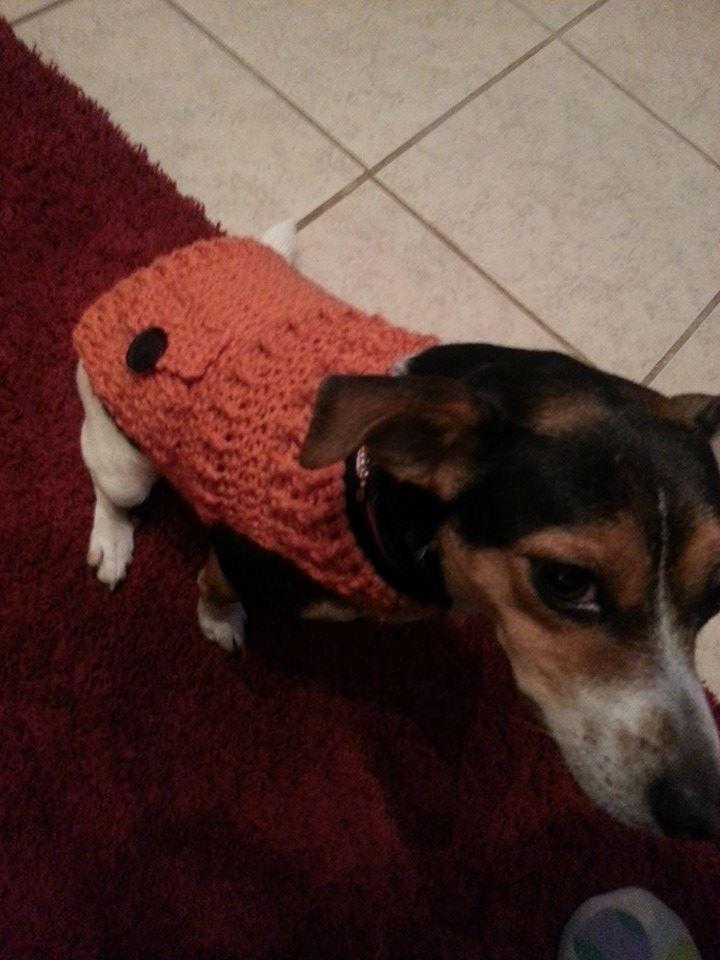 Free crochet dog sweater pattern! | knitting/ Crochetting ...