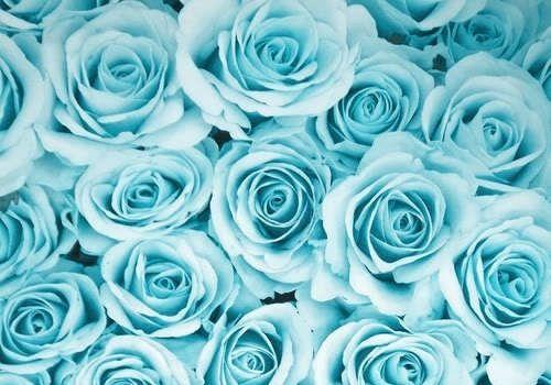 Beautiful Black Roses Tumblr Daydreaming Via Tumblr