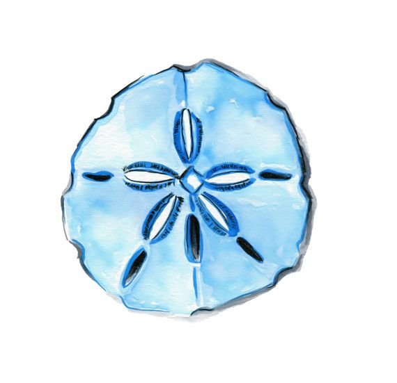 Sand Dollar Watercolor