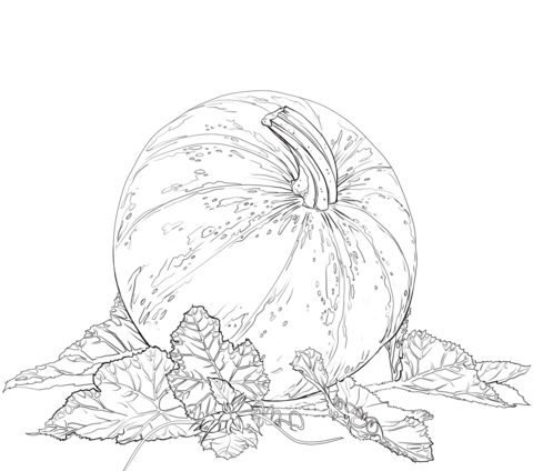 Pumpkin with Leaves Coloring page  Coloring  Challenges