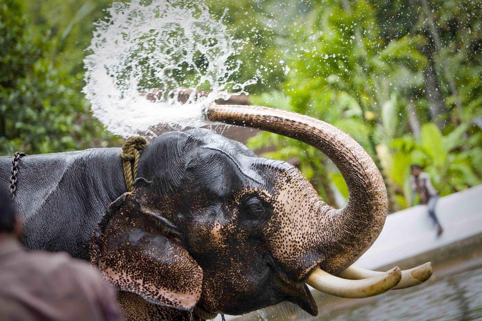 kerala-elephants-foaming-girls-forum