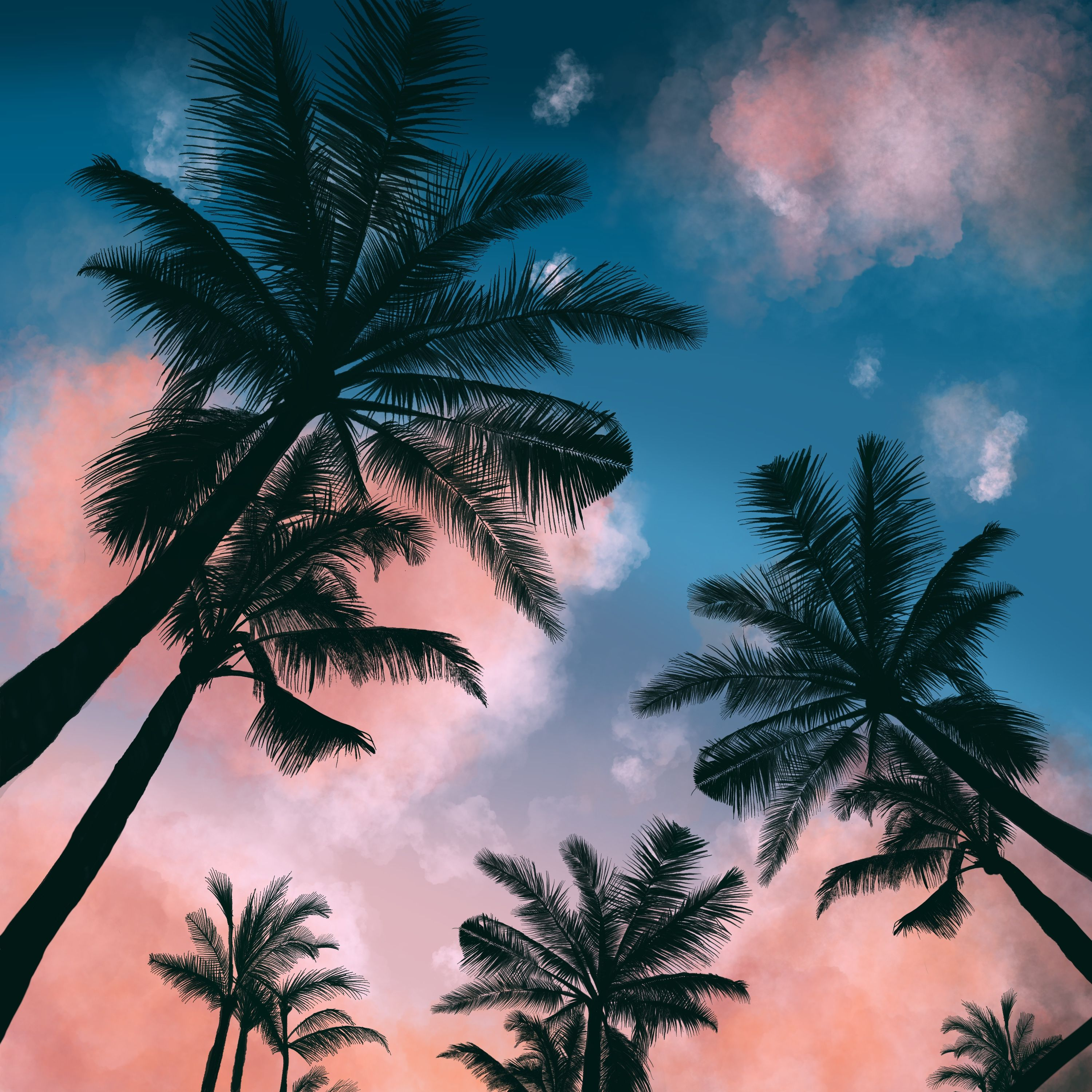 Palm Trees On Procreate Palm Tree Sunset Palm Trees Painting Aesthetic Painting Tropics palm trees sunset clouds sky