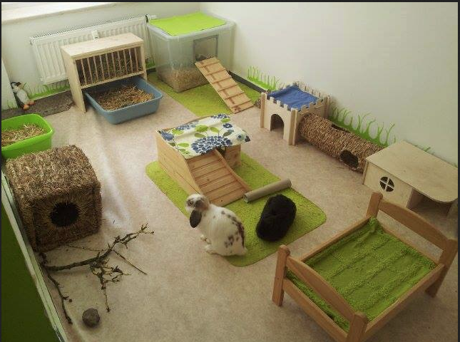 aire de jeux pour lapin espace vie lapin pinterest cieux maison et lapins. Black Bedroom Furniture Sets. Home Design Ideas