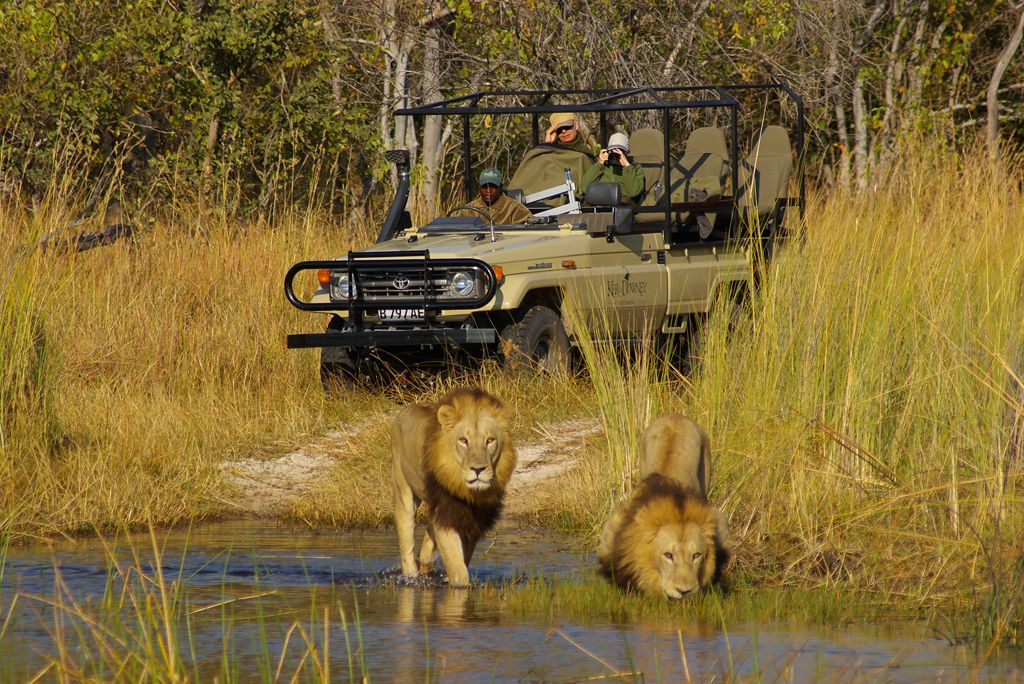 Moremi Game Reserve Okavango Delta Game reserve