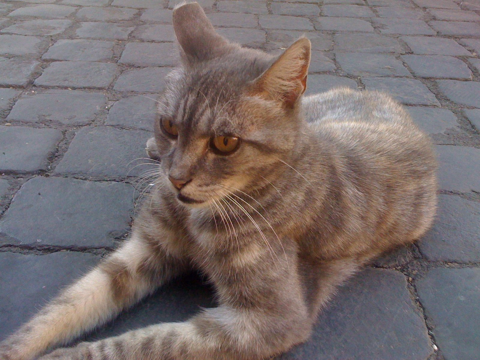 Torre Argentina Cat Sanctuary Cats Kitty