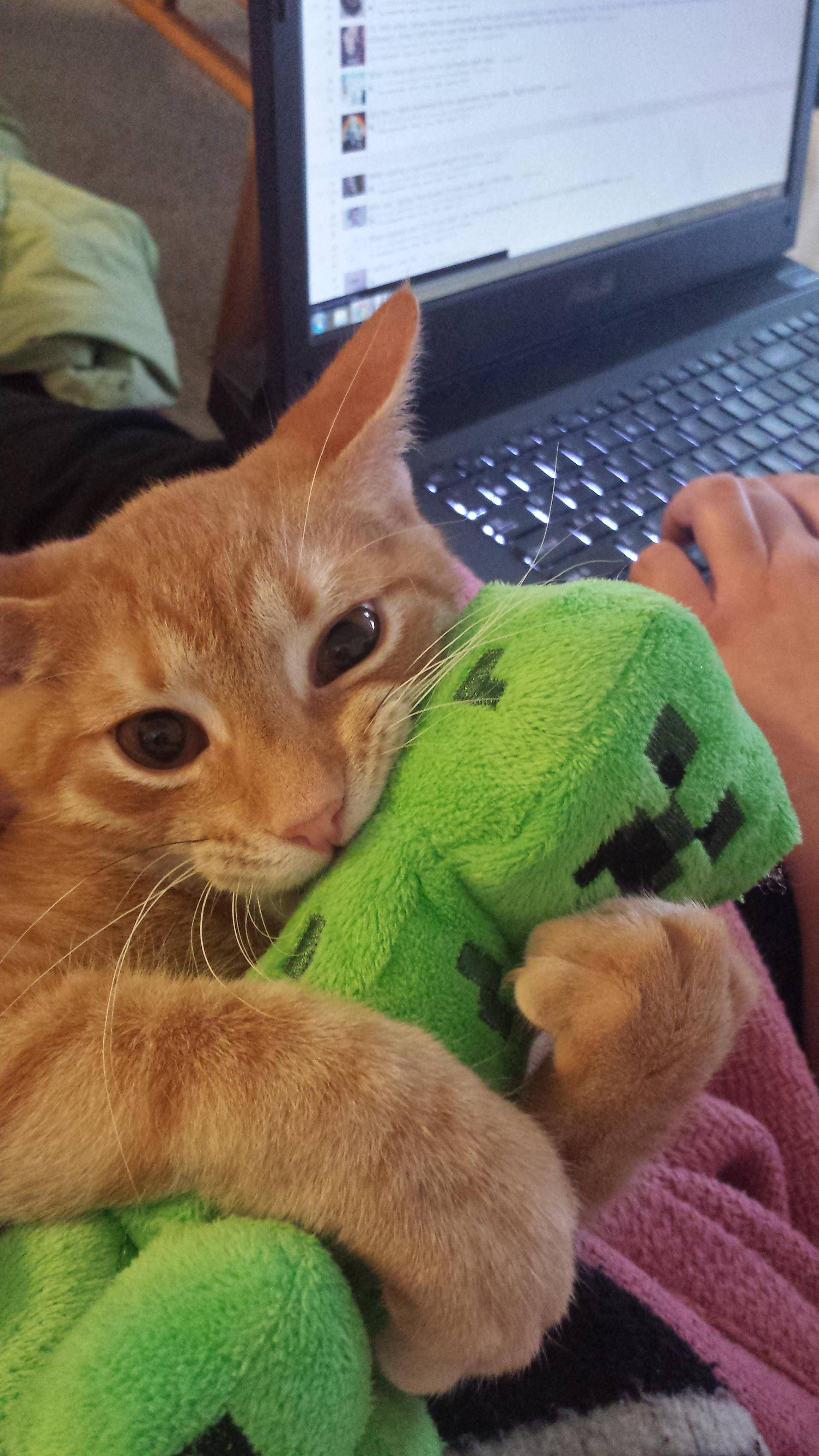 Aww Go Kitty Teach That Thing A Lesson Thats Why Creepers Are Afraid Of Oselots