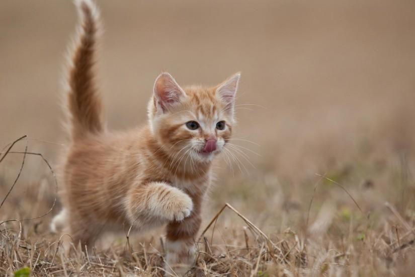 Kitten Wallpaper 2 Kittens Cutest Pets Cats Kitten Wallpaper