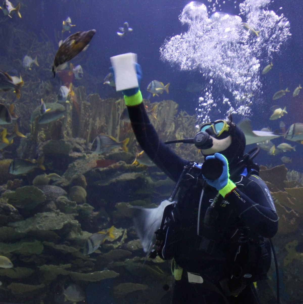 Aquarium cleaning. Such a crazy job! | Aquarium, Job, Cleaning
