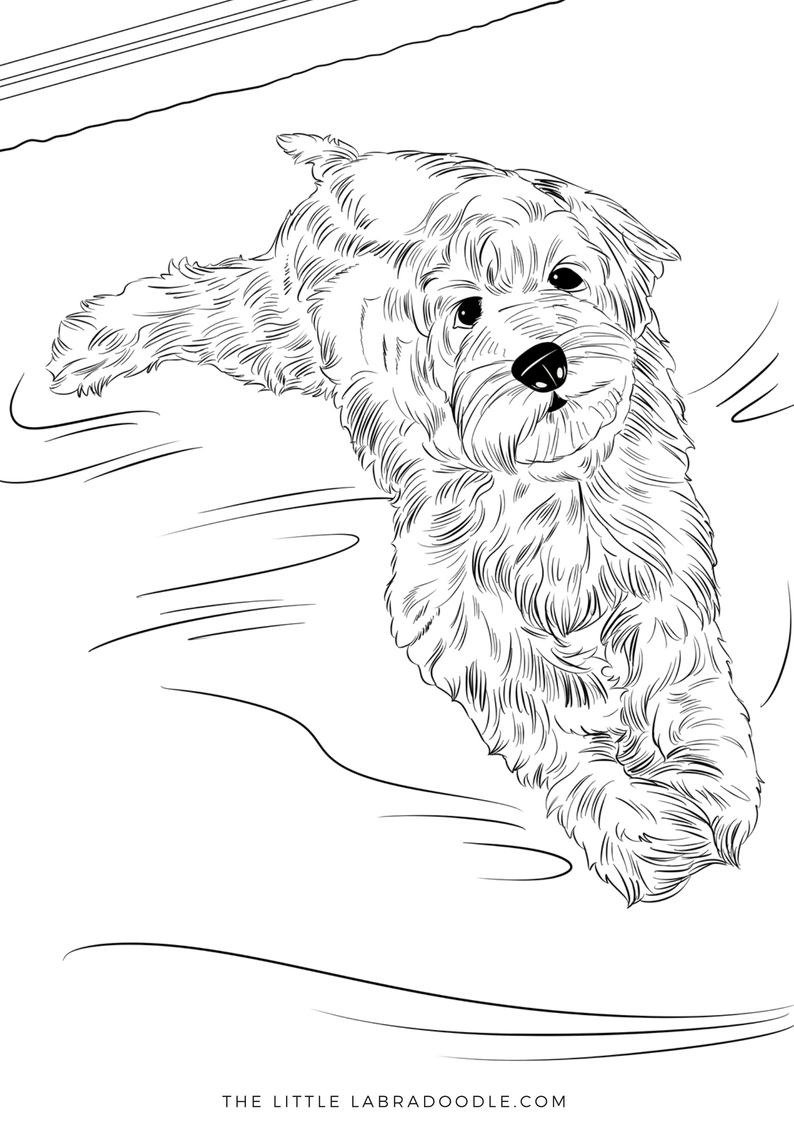 Colouring Book Dogs Trust