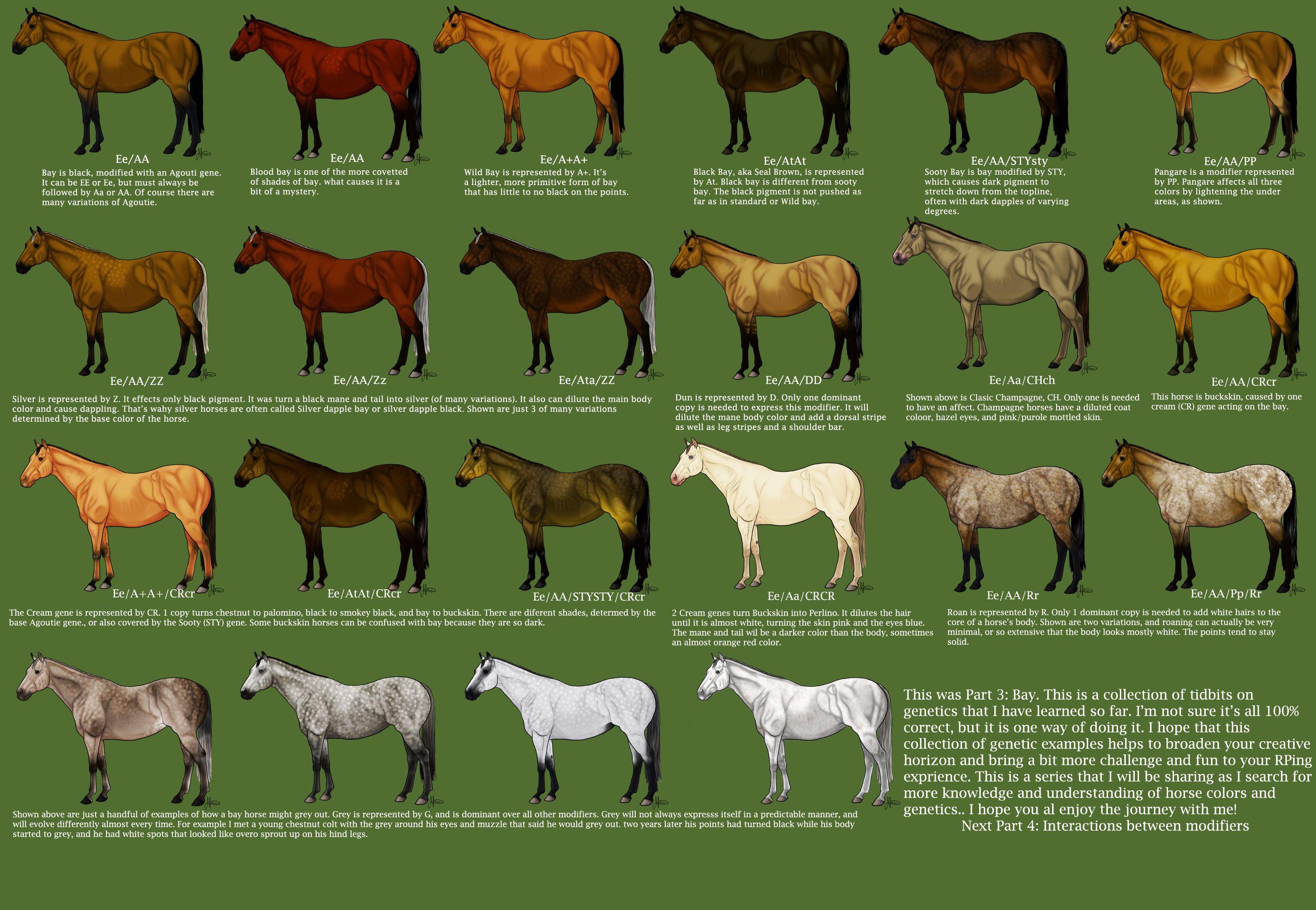наличие типы лошадей картинки избежать