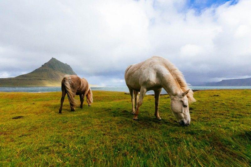 صور جميلة جديدة 2019 صور خلفيات 2019 اجمل الصور خلفيات واتس اب صور 2019 خلفيات 2019 Horse Feed Horses Horse Wallpaper