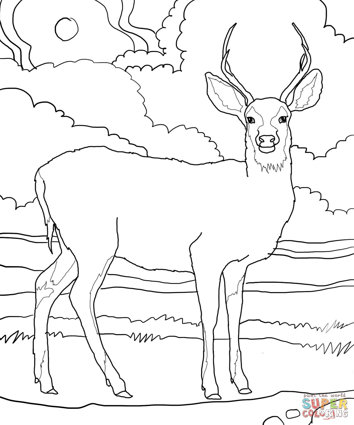 Mule Deer Coloring Page Supercoloring Com Deer Coloring Pages Bird Coloring Pages Animal Coloring Pages