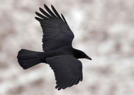 Résultats Google Recherche d'images correspondant à http://www.atout-pigeon.com/photo/art/default/1950976-2683799.jpg%3Fv%3D1289440623