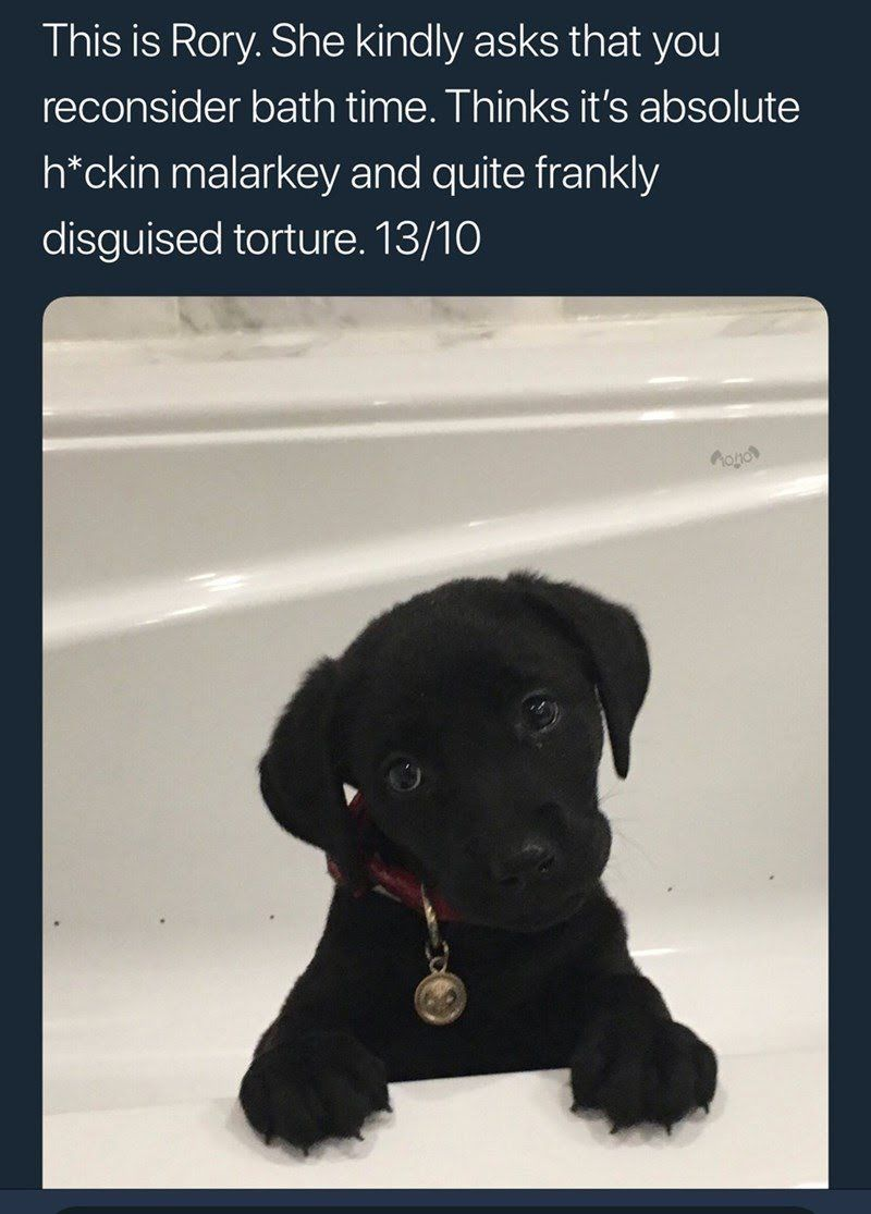 18 Fresh And Funny Tweets From The Masterminds At WeRateDogs