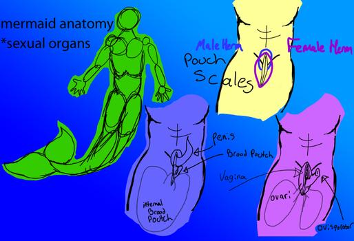 Animated sexual anatomy